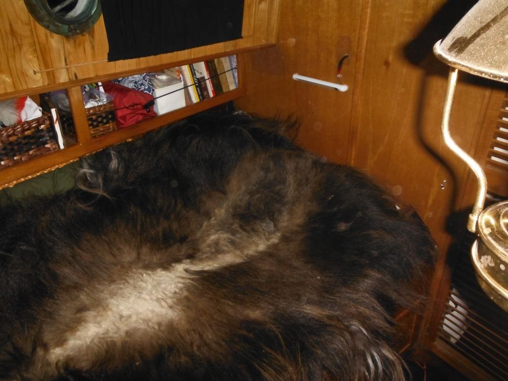 Our Muskox hide blanket.